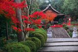 建勲神社 紅葉と拝殿
