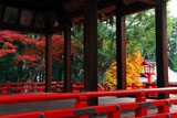 建勲神社 拝殿越しの紅葉