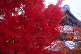 京都阿弥陀寺 紅葉と庫裏
