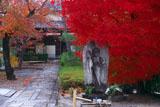 阿弥陀寺 石仏に楓紅葉と桜紅葉