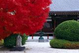 京都阿弥陀寺 紅葉と本堂