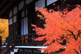 京都上善寺 紅葉と本堂