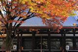 本能寺 ケヤキ紅葉と本堂