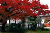 本隆寺 紅葉と本堂