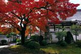 本隆寺 タカオカエデと本堂