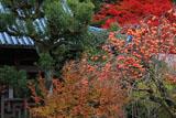 石峰寺 柿と本堂と紅葉