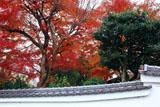 宝塔寺 慈雲院の紅葉