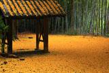 山崎聖天 竹林と敷銀杏
