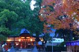 吉祥院天満宮 宵の拝殿とケヤキ紅葉