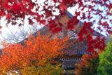 壬生寺 紅葉と本堂