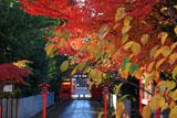 車折神社 紅葉の表参道