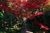 鹿王院 参道の紅葉