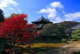 鹿王院 紅葉の庭園と舎利殿