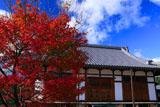 京都遍照寺 紅葉と客殿