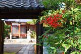 京都遍照寺 南天と中門