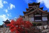伏見桃山城 紅葉と大小天守