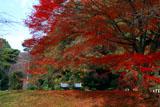 伏見桃山陵 紅葉と石段