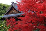 京都乃木神社 紅葉と拝殿