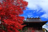 京都乃木神社 紅葉と本殿