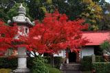 京都乃木神社 紅葉と第三軍司令部