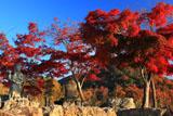 広沢池 紅葉の観音島と遍照寺山