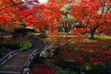 宝厳院 小橋と紅葉