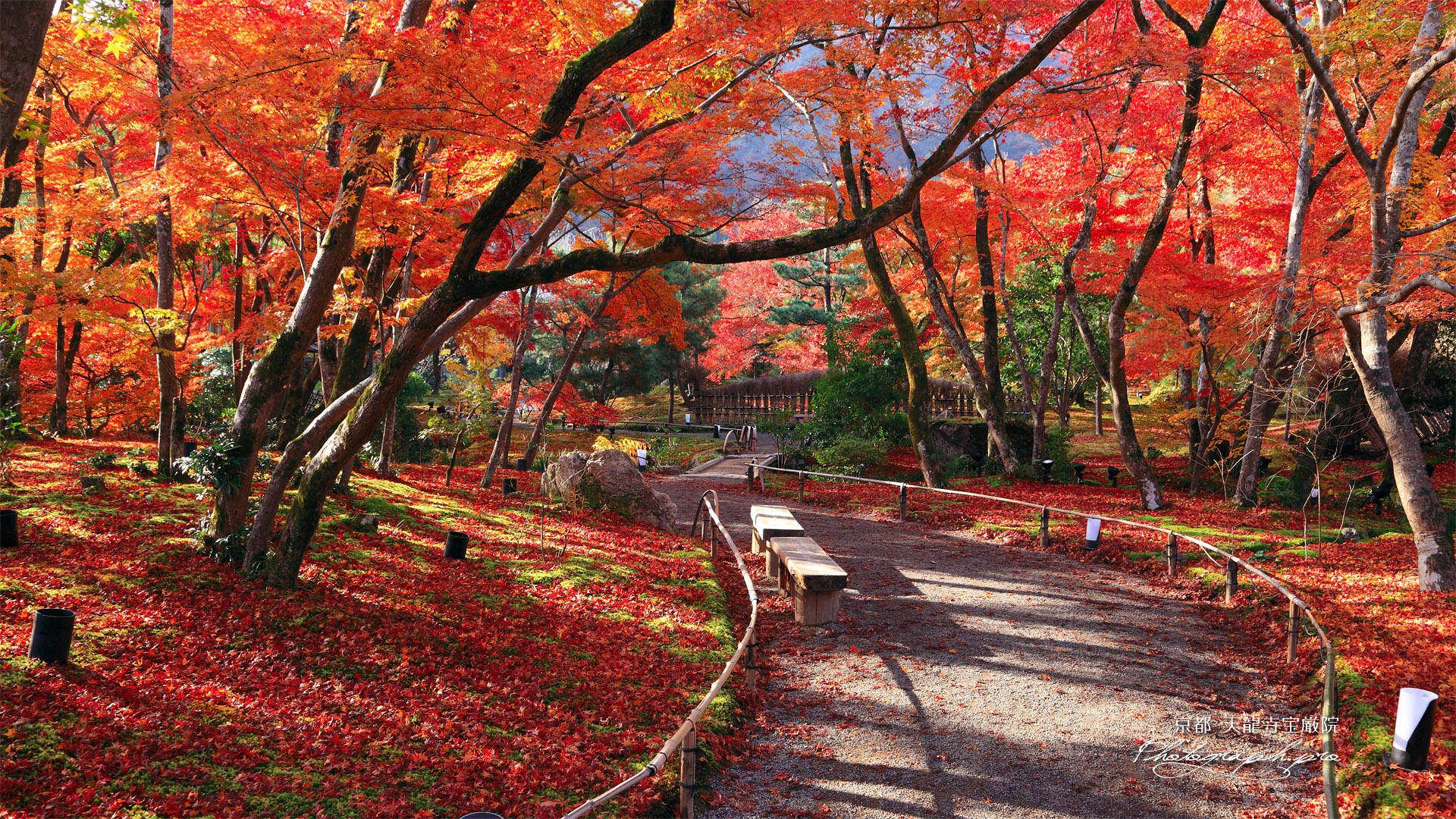 宝厳院 紅葉越しの嵐山 の壁紙 19x1080