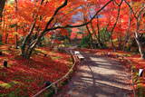 宝厳院 紅葉越しの嵐山