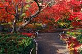 宝厳院 紅葉の獅子吼の庭
