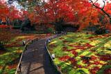 宝厳院 苔庭と紅葉