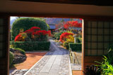 弘源寺 庫裏玄関から紅葉の参道