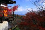 京都千光寺 紅葉の大悲閣と比叡山