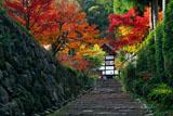 京都正伝寺 紅葉の参道と庫裏