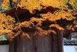 京都正伝寺 紅葉と勅使門