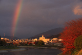 鴨川 桜紅葉と虹
