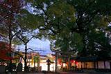 新熊野神社 宵の大樟と紅葉