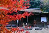 宇治上神社 紅葉と拝殿
