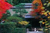 宇治上神社 紅葉と社殿