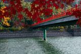 宇治神社 紅葉越の朝霧橋