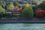 宇治川の急流と紅葉