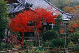 宇治 恵心院の紅葉と本堂