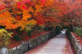 興聖寺 紅葉の琴坂