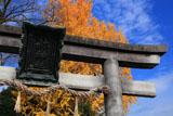県神社 鳥居扁額と銀杏黄葉