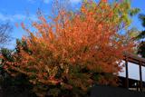 宇治 紅葉の橋姫神社