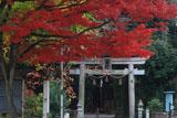雙栗神社 紅葉と鳥居