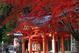 長岡天満宮 紅葉と拝殿