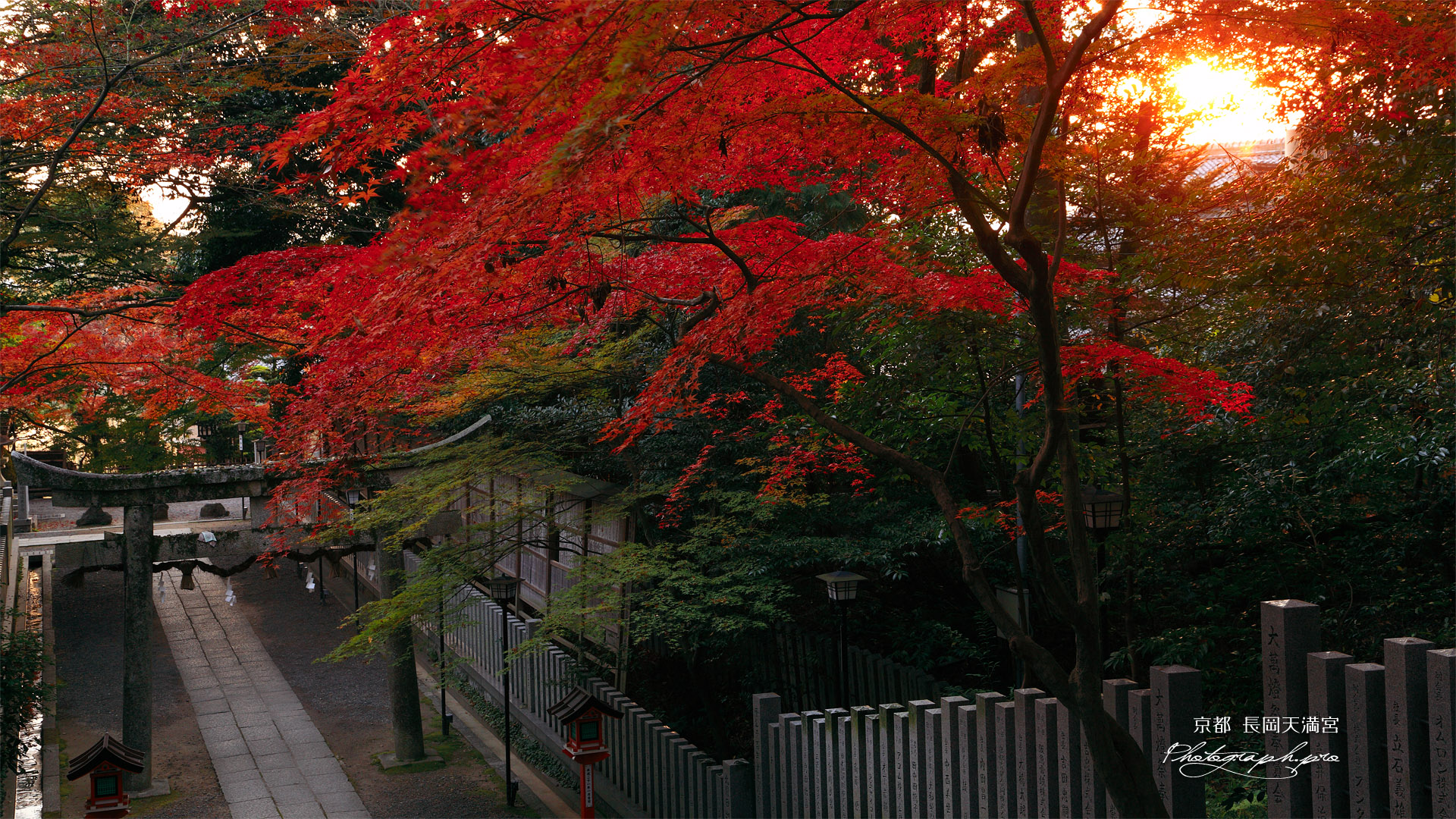 長岡天満宮 朝陽と参道の紅葉