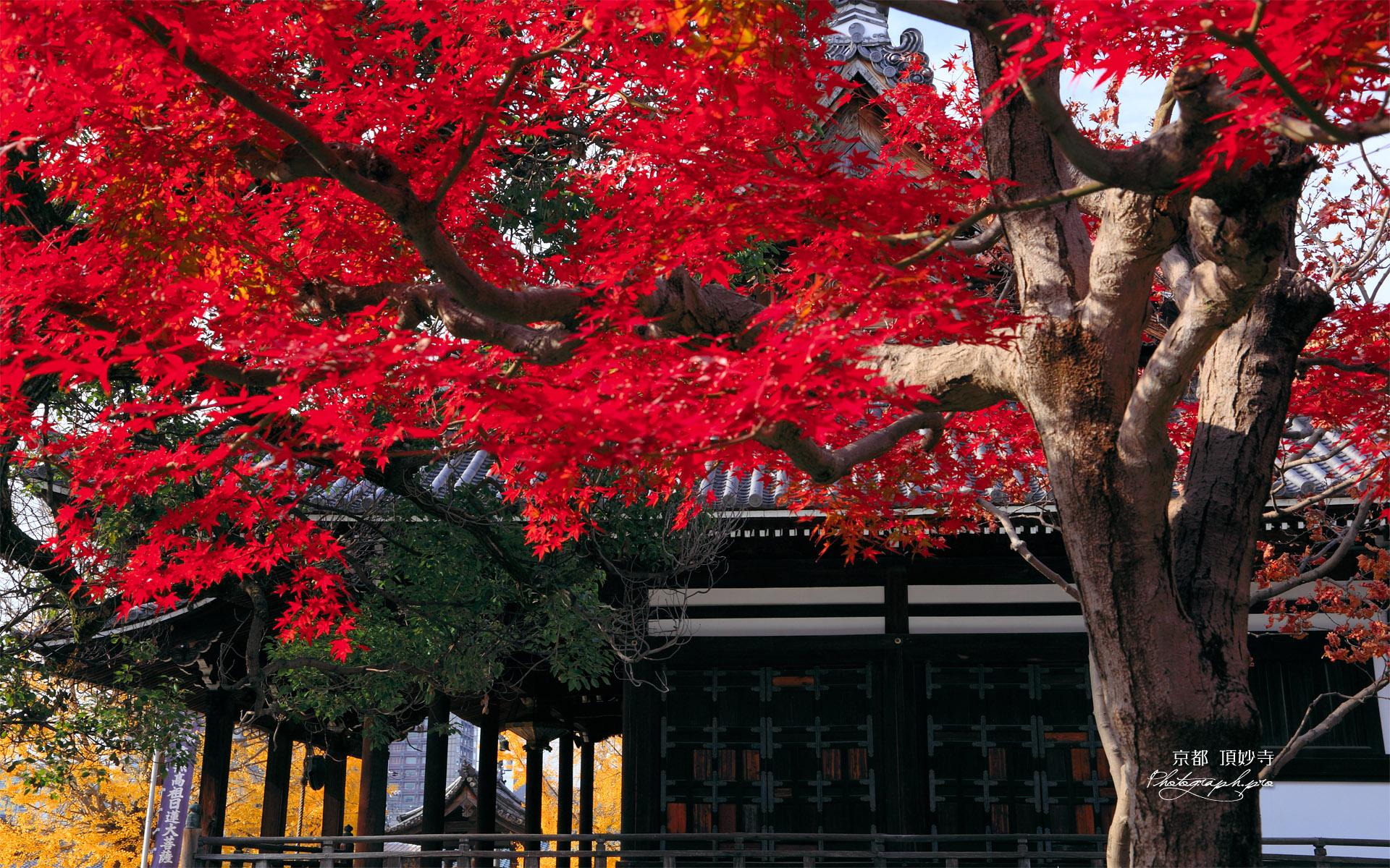 頂妙寺 紅葉と本堂