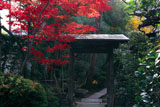 頂妙寺妙雲院の紅葉