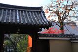 禅居庵 柿の実と紅葉